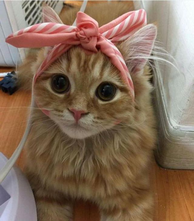 Mama Look at my new headbands!Is it cute huh?