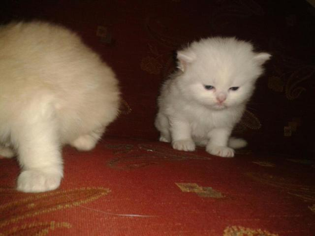 my little kitty cats i love them so much and they like to play with me everytime