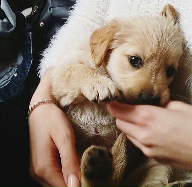 #petslover hey guys, meet my puppy, she is 3 weeks old and still adorable, how many likes my puppy can get for his