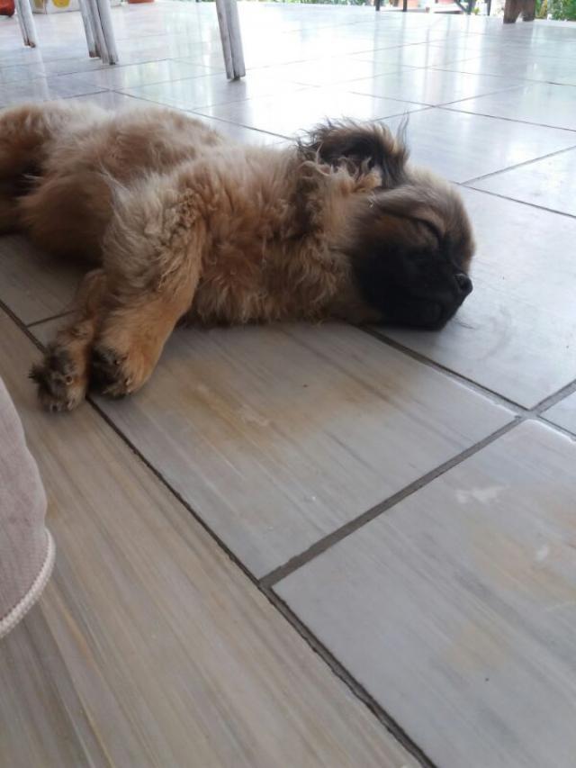 My puppy is sleeping